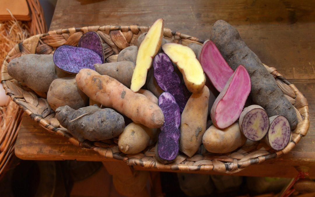 Blaues Kartoffel-Rösti